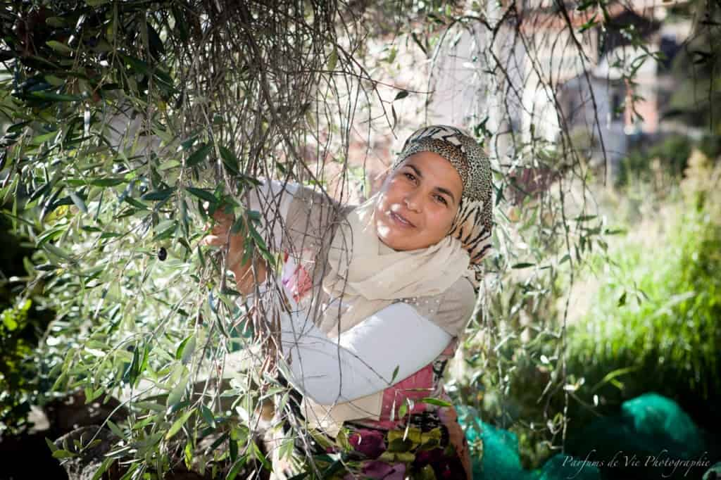 Radhia harvesting olives at Villa des Parfums