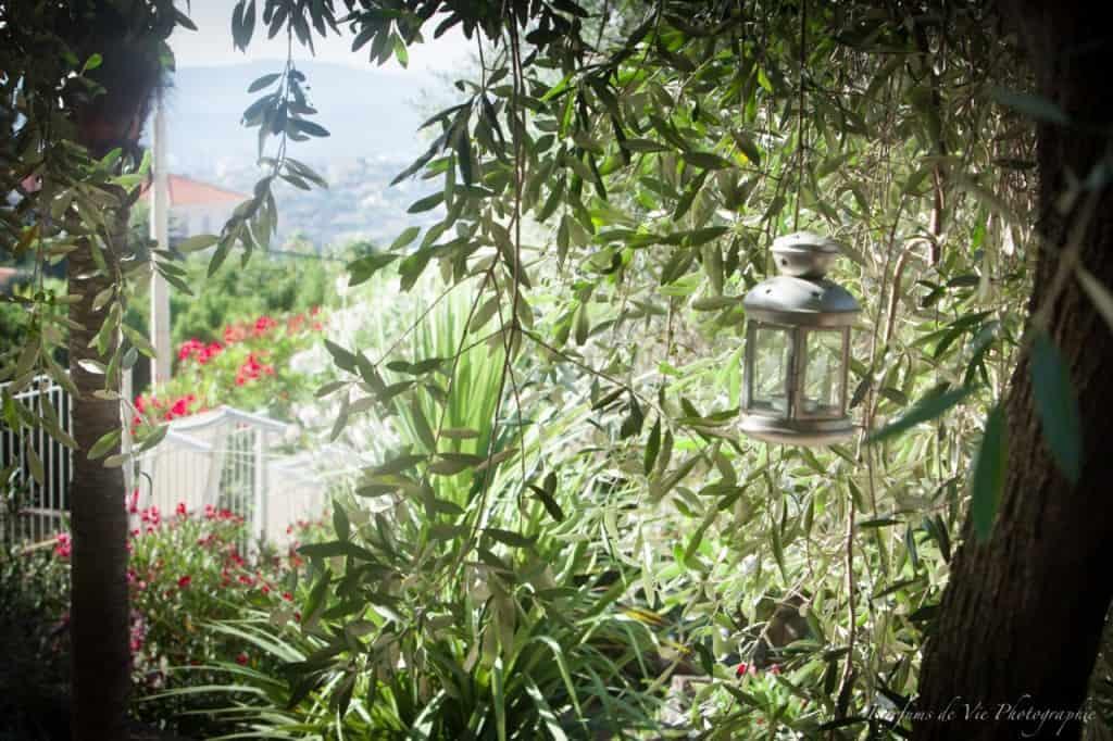 Olive Trees at Villa des Parfums