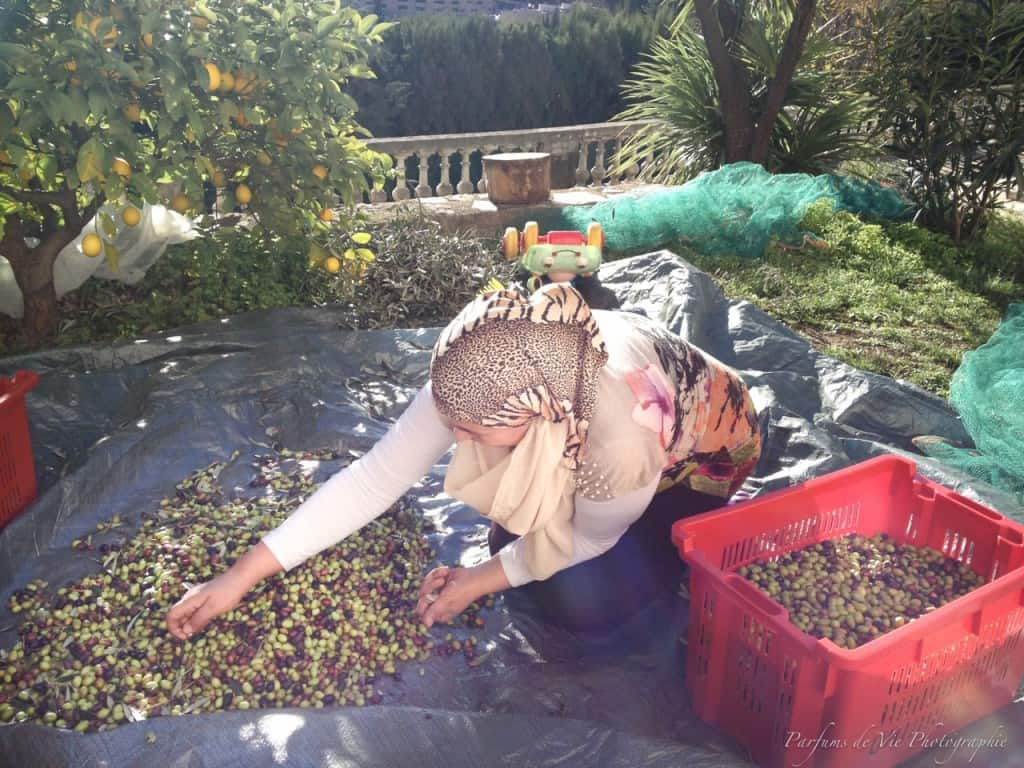 Radhia sorting the olives at Villa des Parfums