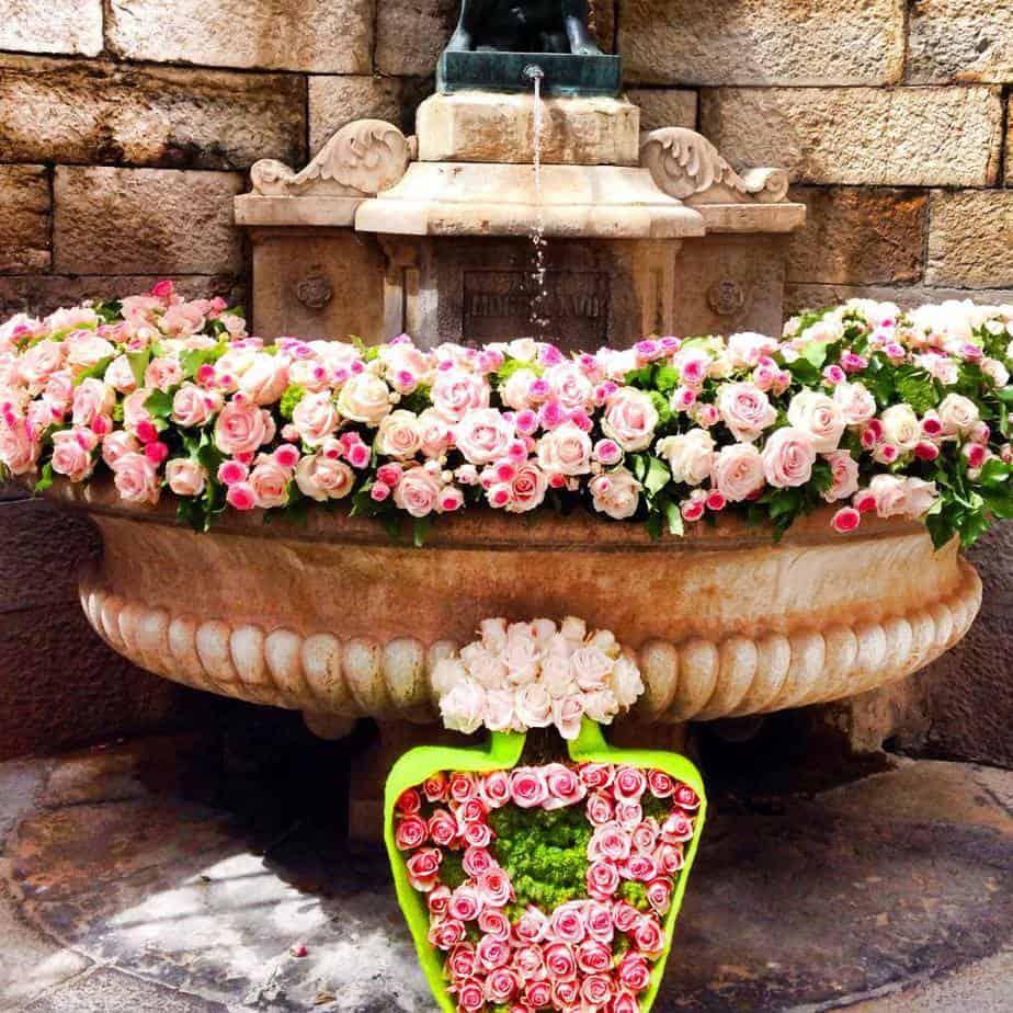 Grasse Roses