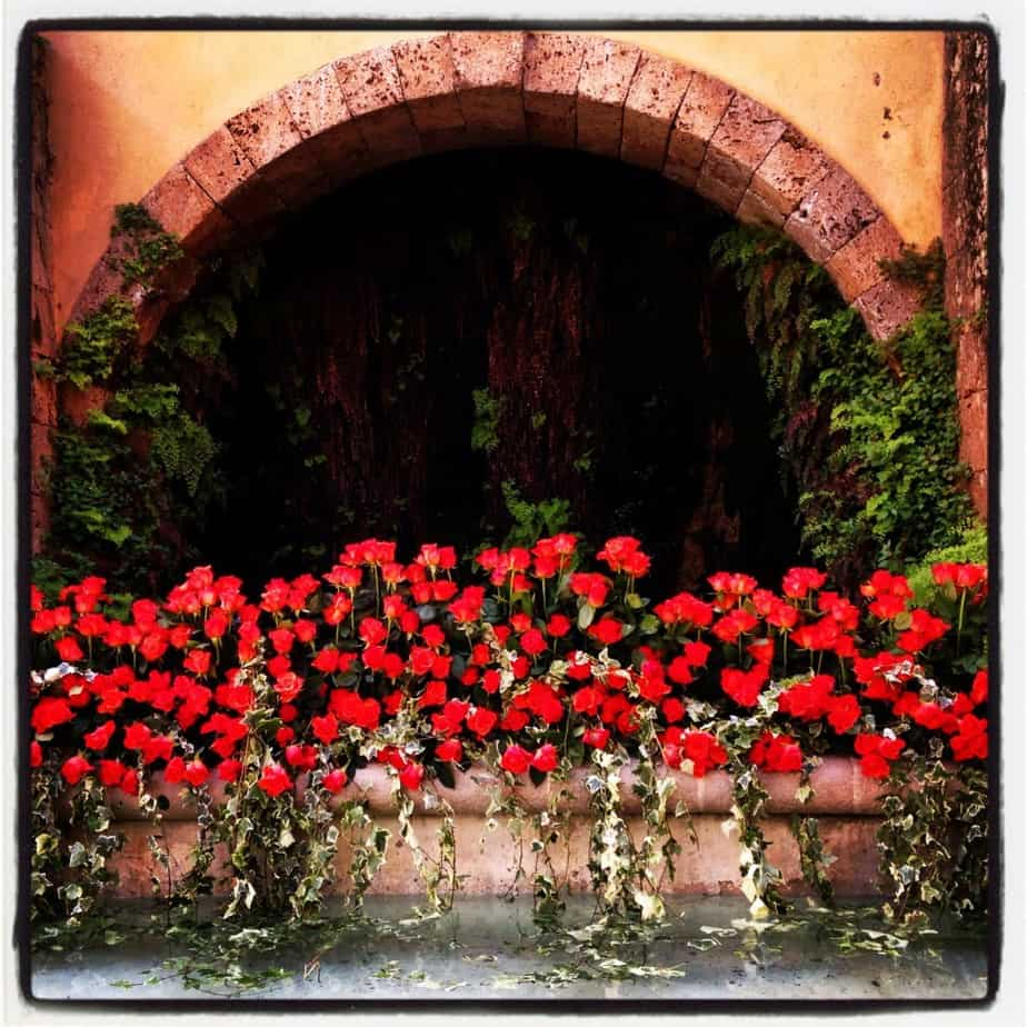Red Roses Grasse